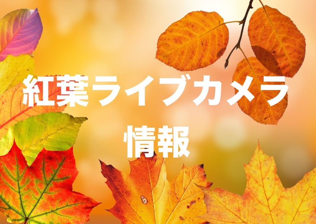 大 内宿 ライブ カメラ